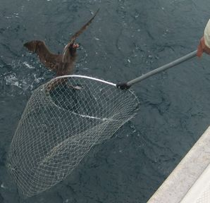 みずなぎ鳥と網